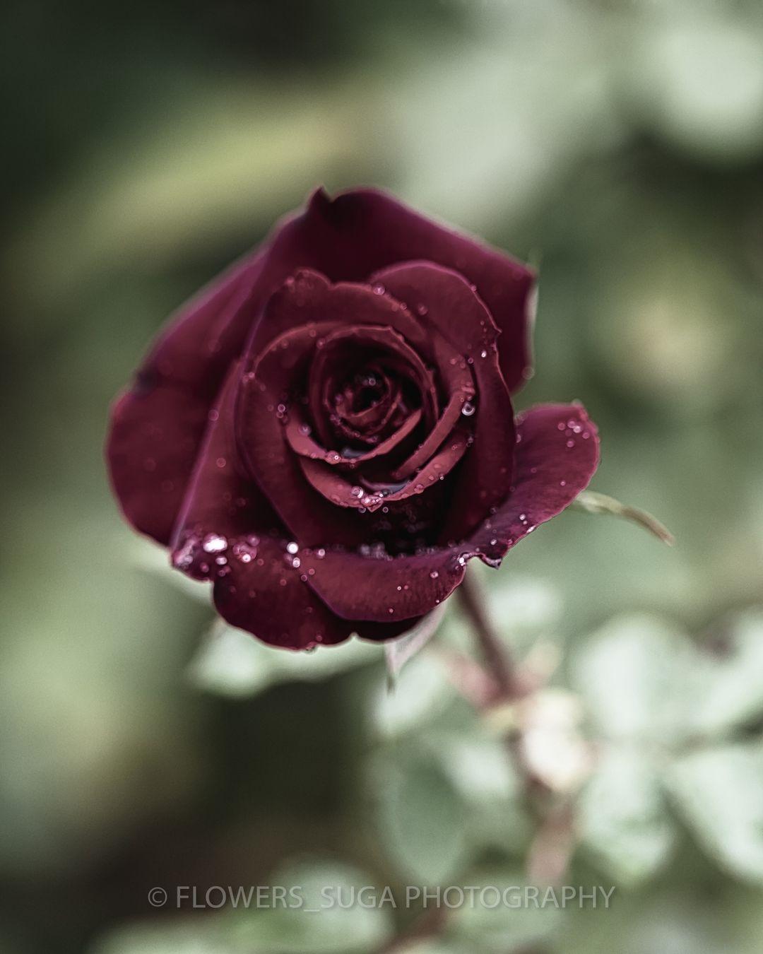 Красота цветов на снимках Хисаши Сугам