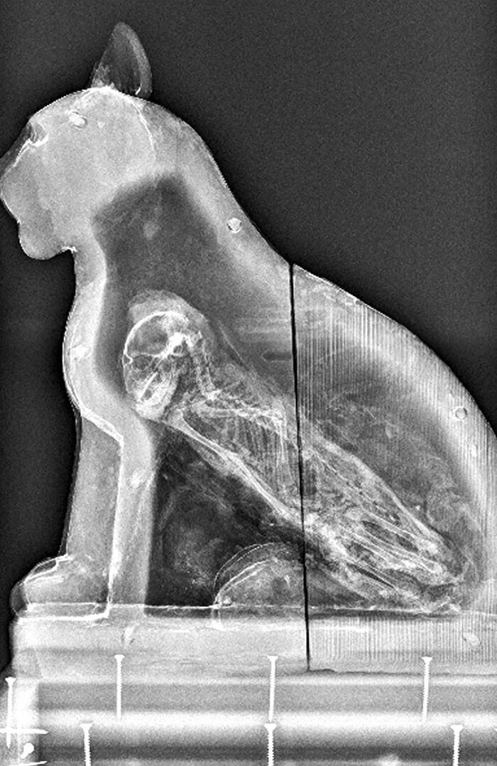 Рентгеновские снимки, которые показали интересные результаты