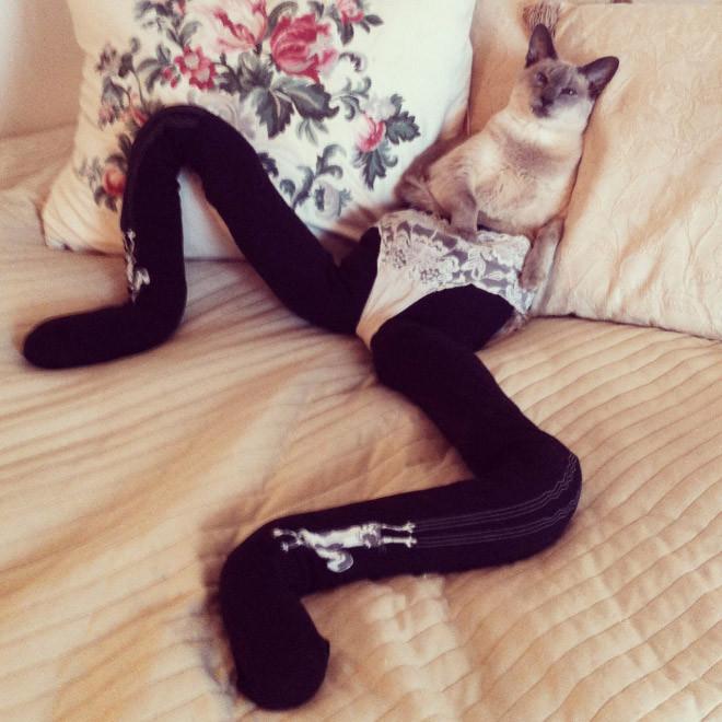 Если бы кошки носили колготки, трико и другую одежду