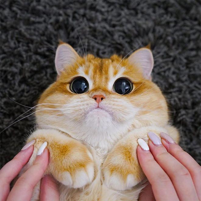 Котик Писко, который похож на Кота в сапогах из Шрека