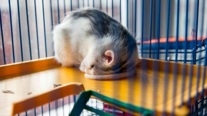 Любопытные факты про то, как спят разные животные