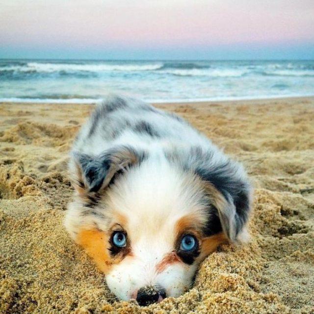Красивые и милые щенки, которые вызовут у вас умиление