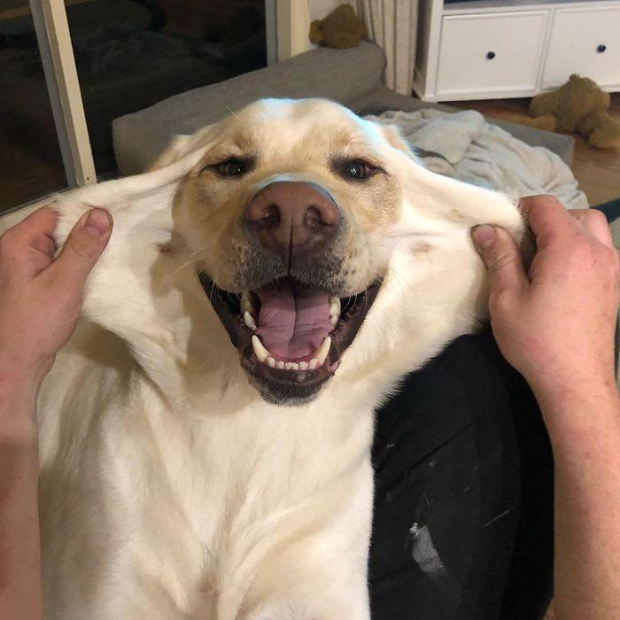 Собаки с милыми щёчками, за которые так и хочется потрепать