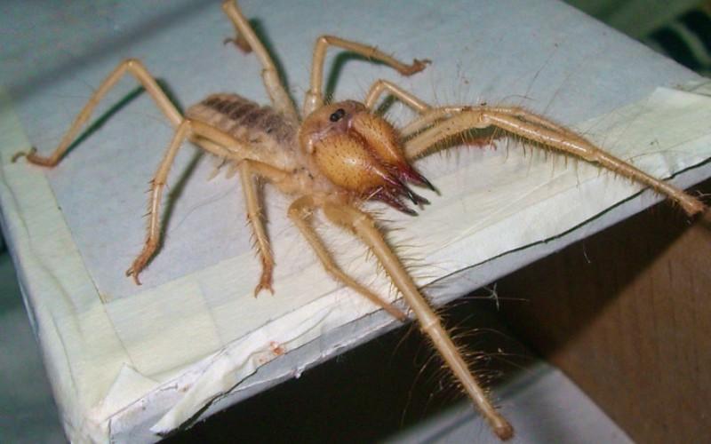 Самые ядовитые пауки, которых действительно стоит опасаться