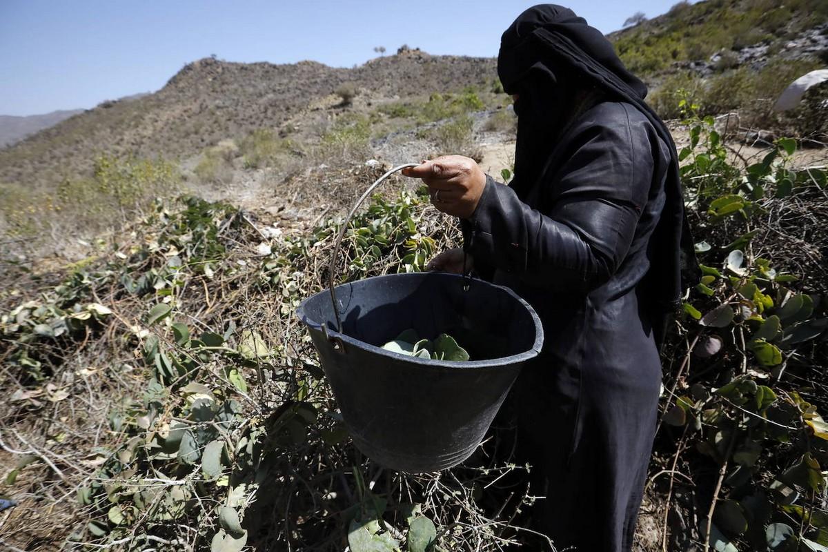 В Йемене люди вынуждены питаться листьями, чтобы не умереть от голода