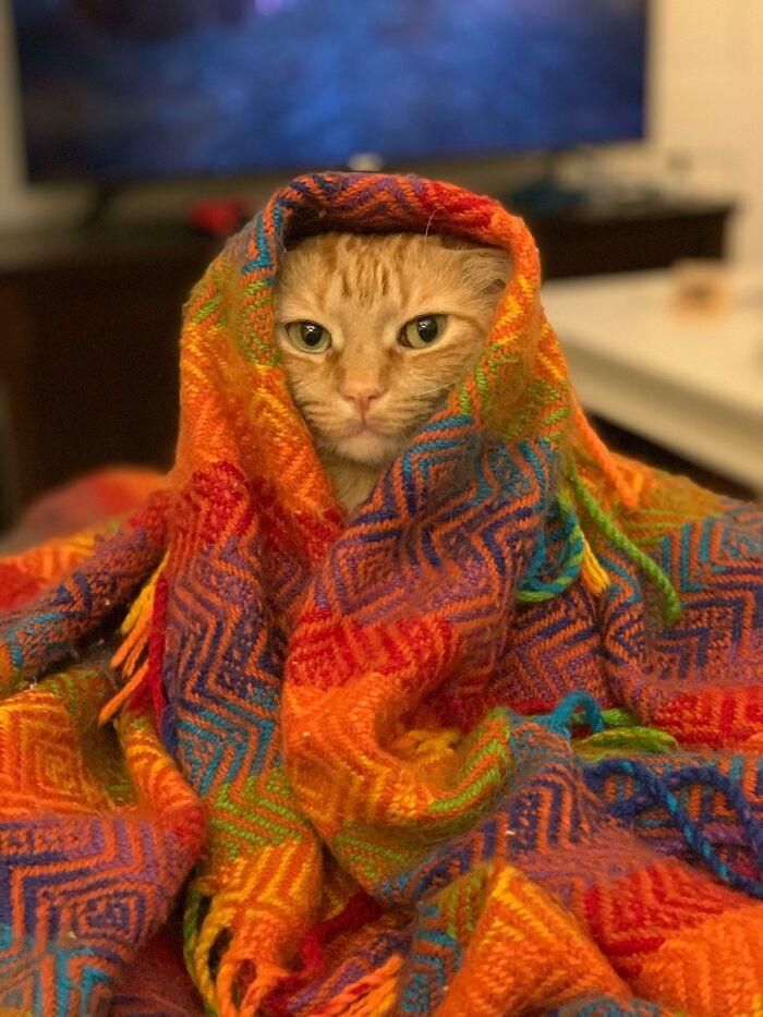 Кошки-бабушки завёрнутые в платки