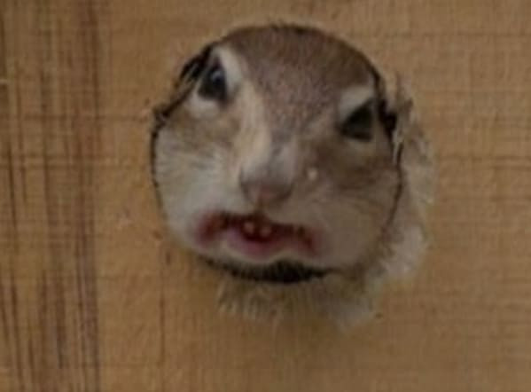Неудавшиеся фотографии животных, которые не так уж и плохи