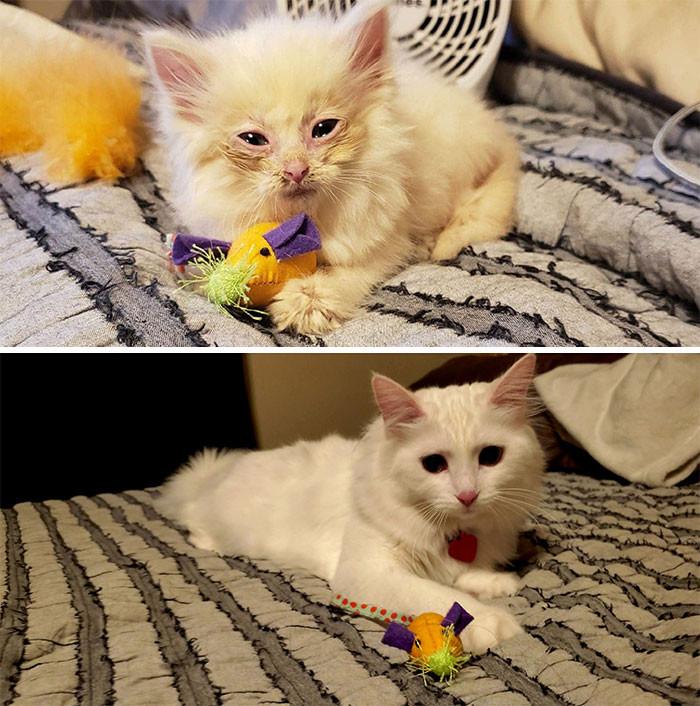Красивые котики, выросшие из крошечных пушистых комочков