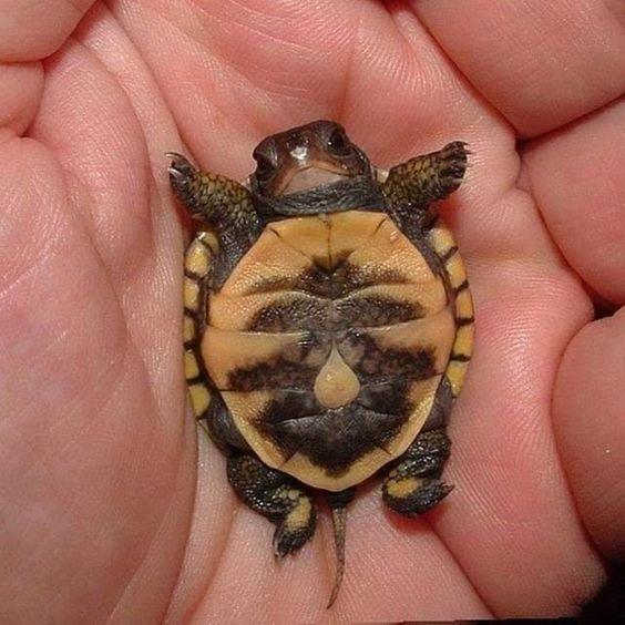 Милые малыши животного мира на снимках