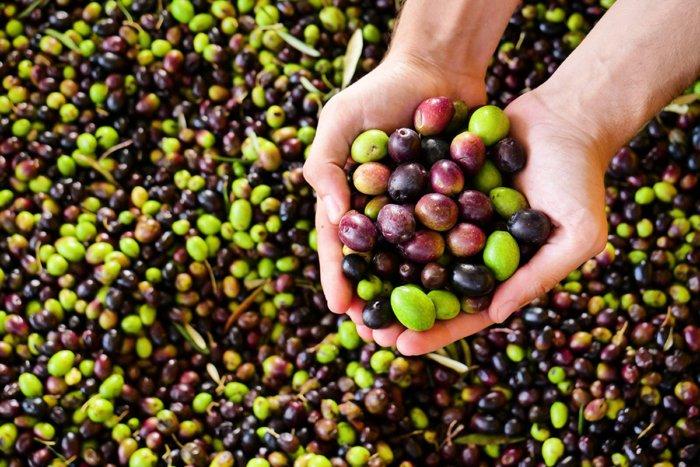 Чем оливки отличаются от маслин?