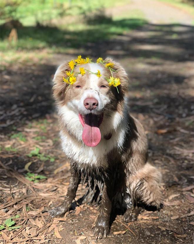 Снимки очаровательных пёселей с цветами