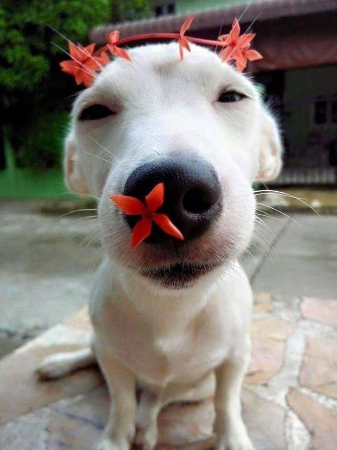 Снимки очаровательных пёселей с цветами Животные