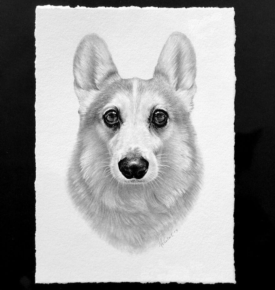 Гиперреалистичные карандашные портреты домашних животных