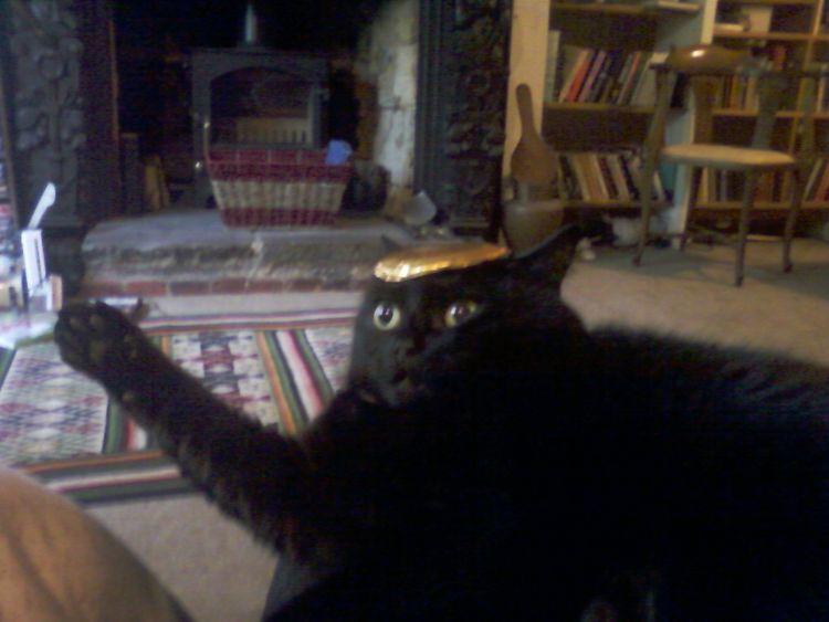 Максимально драматичные снимки котиков