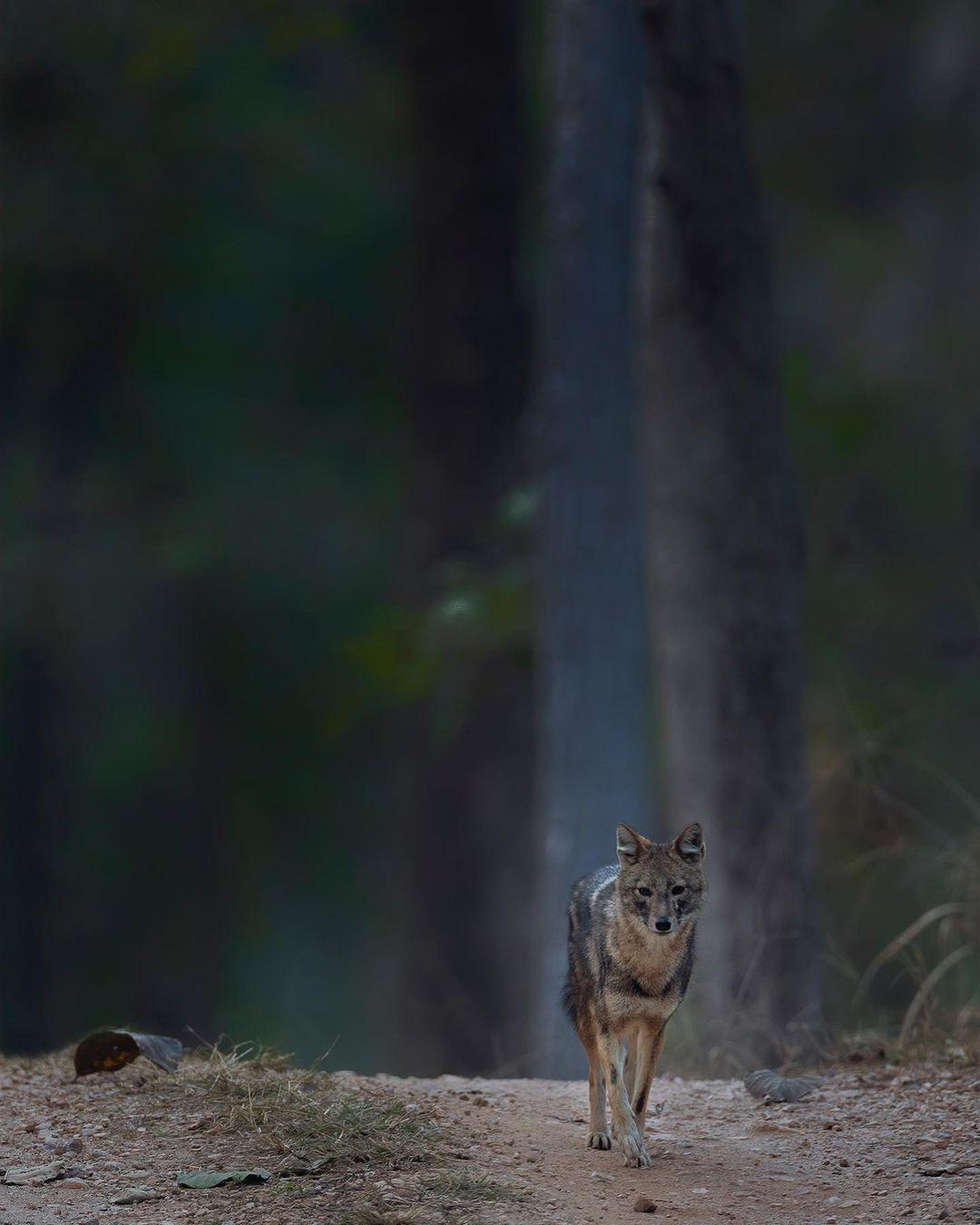 Птицы и животные на красивых снимках от Тхирумурти Ра