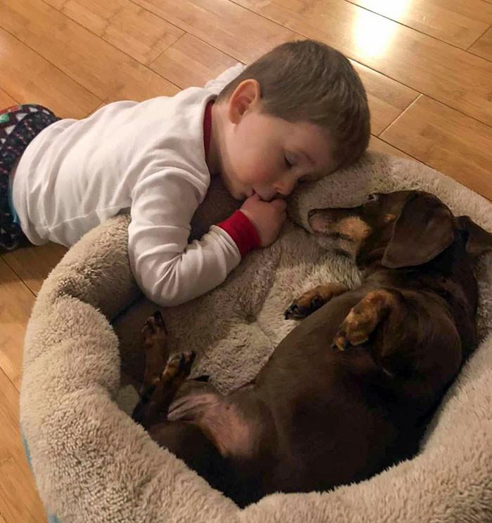 Почему в доме, где растёт ребёнок, должна быть собака Животные