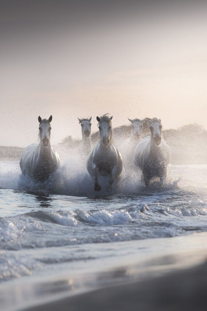 Потрясающие снимки показывают великолепие нашей природы