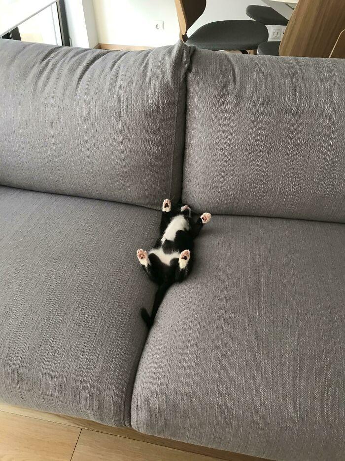 Котики подают пример того, как нужно отдыхать