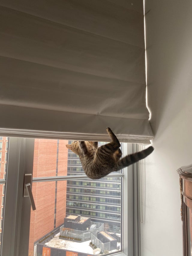 Некоторым котикам просто плевать на правила людей