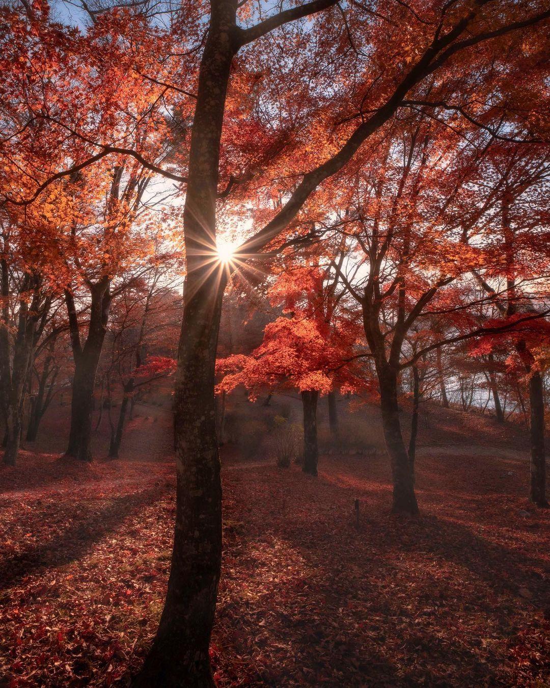Яркие природные снимки Японии от Макико Самедзима