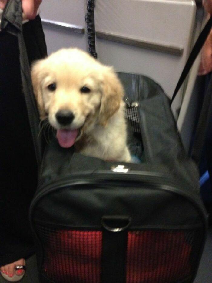 Милые пассажиры, которых можно встретить во время путешествий