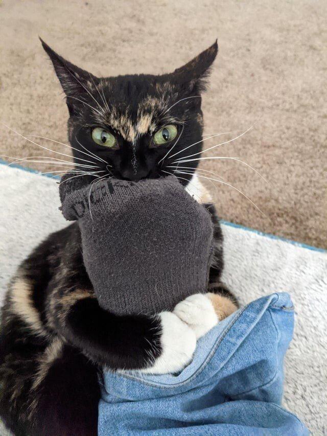 Котики, которые показали свой грозный кусь