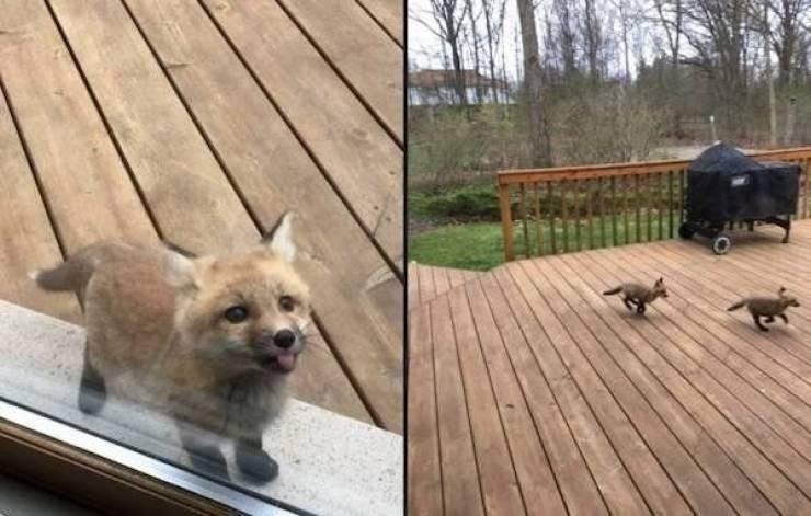 Милые животные на снимках, которые вызовут вашу улыбку