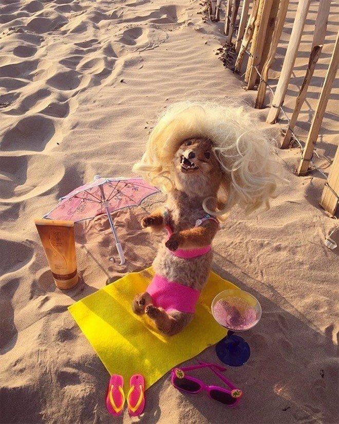 Девушка везде носит с собой чучело лисицы