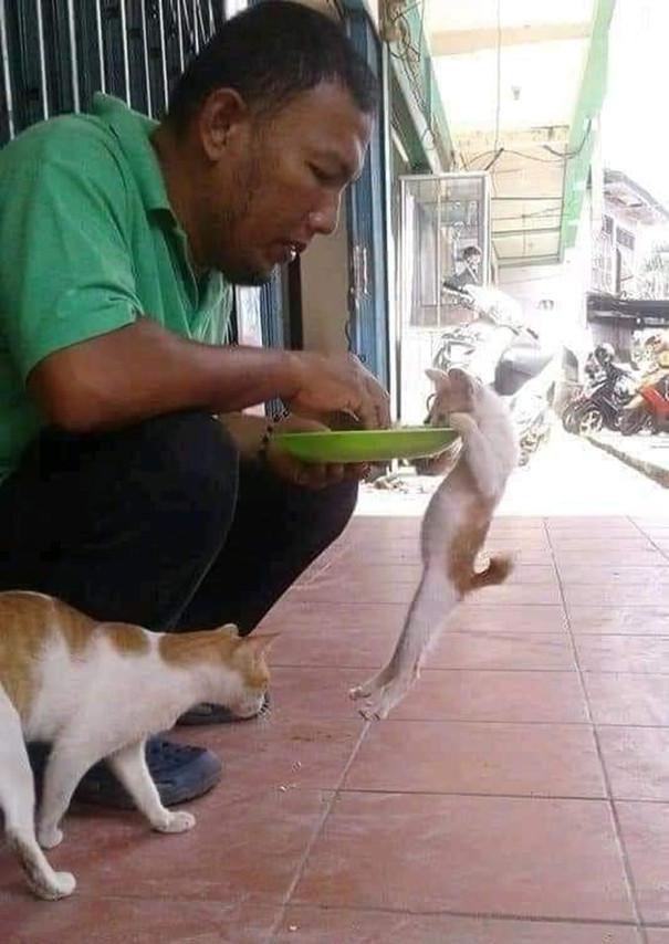 Позитивные снимки с забавными животными