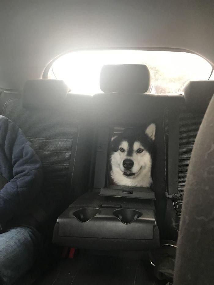 Странные и забавные способы транспортировки собак