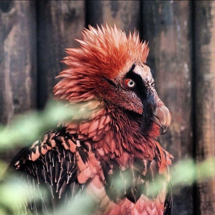 Животные, которые выглядят максимально сурово