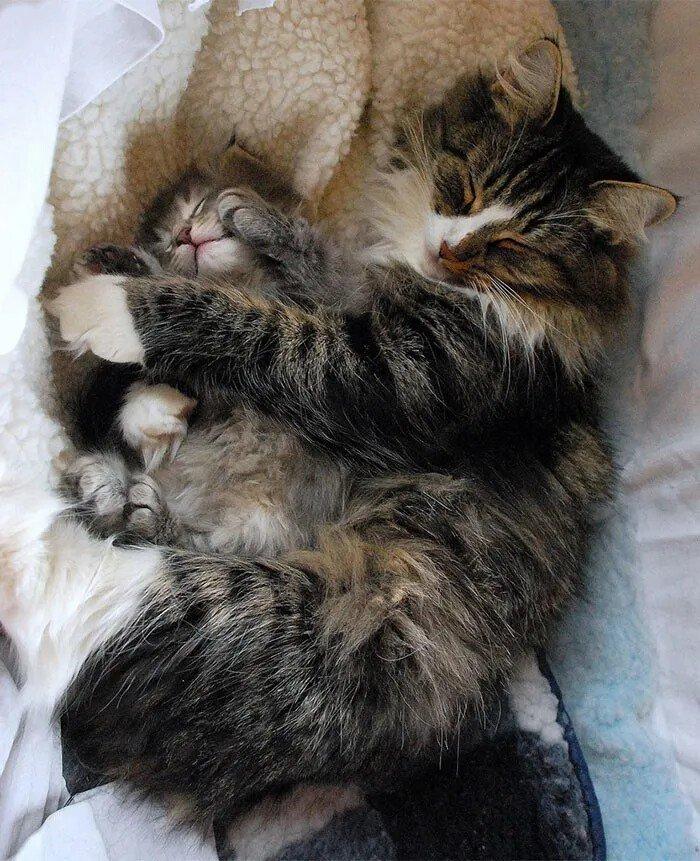Красавицы кошки и их очаровательные мини-копии