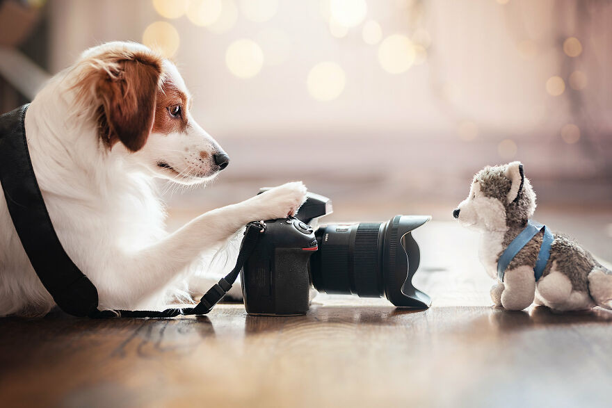 Креативные снимки собак, сделанные фотографом Рией Пуцкер дома