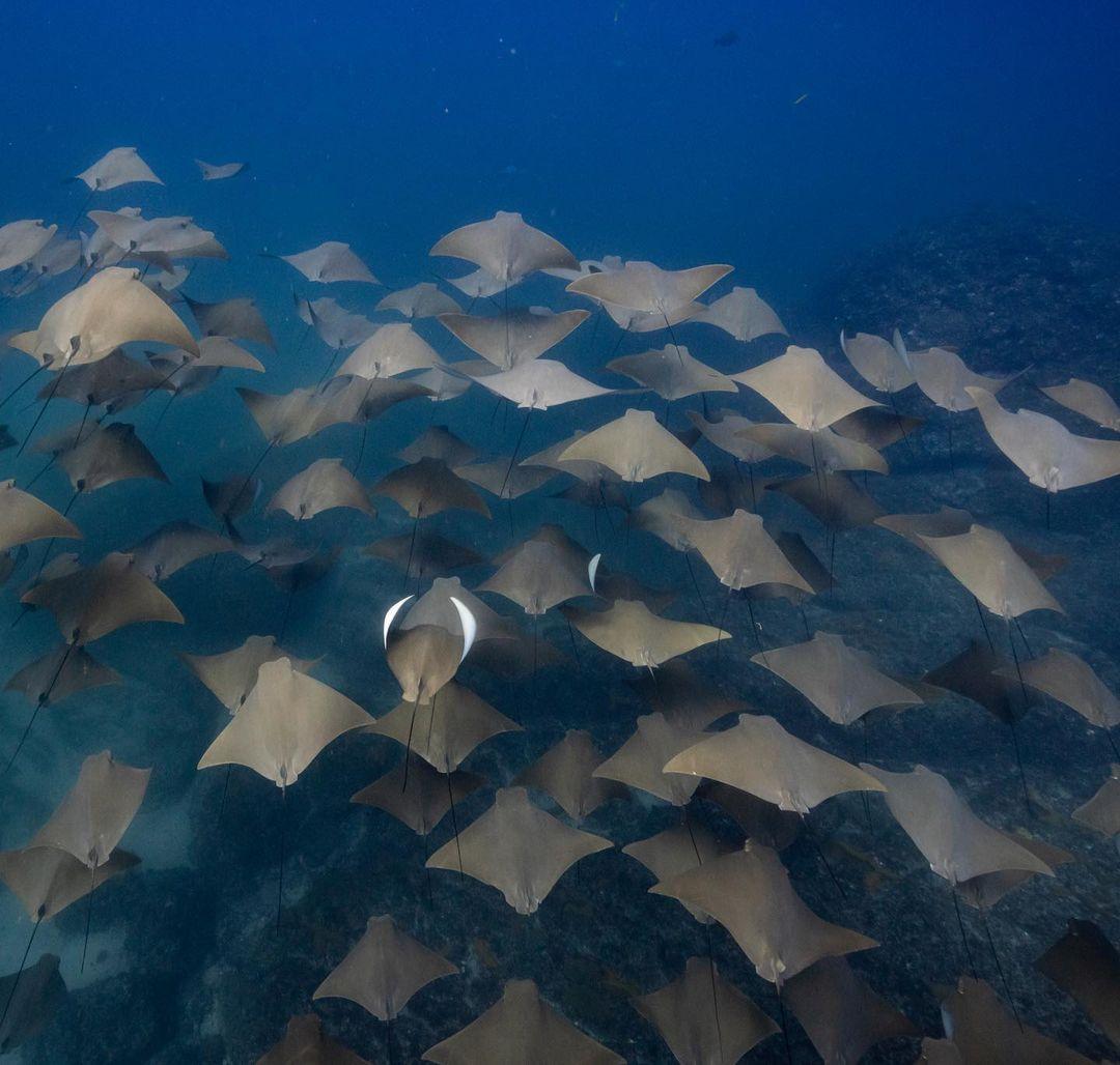 Впечатляющие подводные снимки от Скотта Уилсона