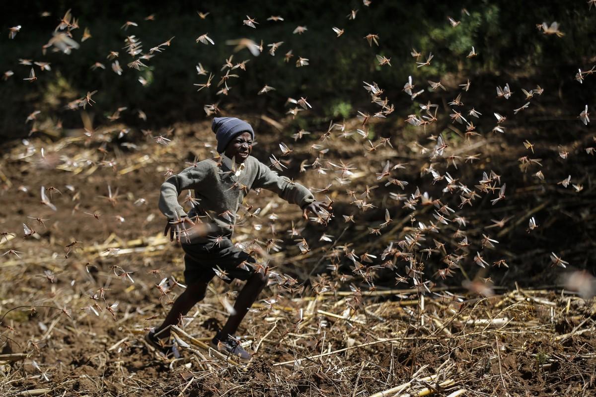 Слабые дожди помогают бороться с саранчой в Кении