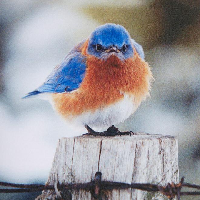 У птиц тоже бывают тяжелые дни