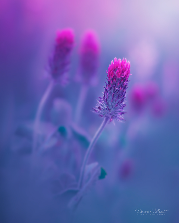 Волшебные фотографии цветов от Дорин Альбрехт