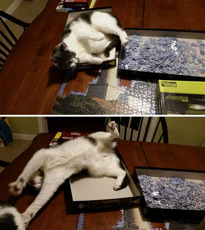Вот почему собирать пазлы нужно в комнате, в которой нет котиков