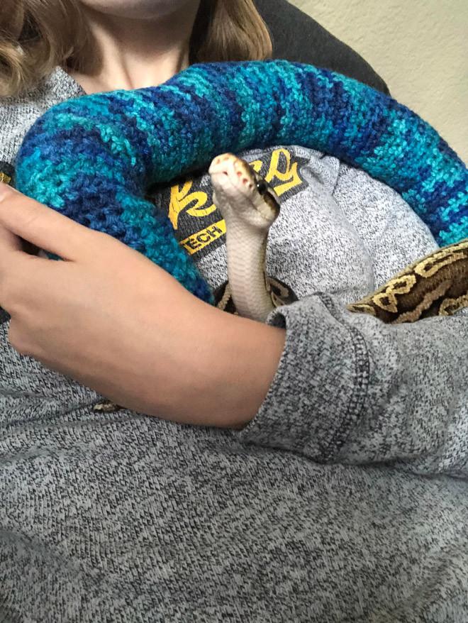 Змеи в вязаных свитерах на снимках
