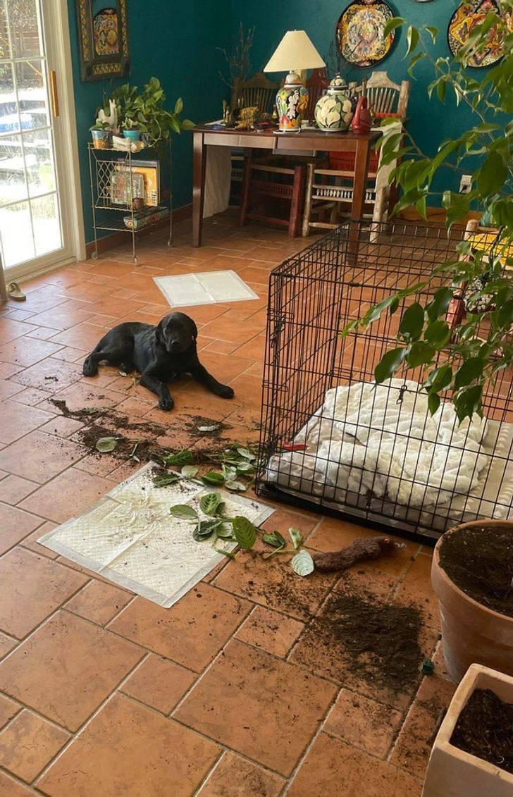 Домашние животные, застигнутые на месте преступления