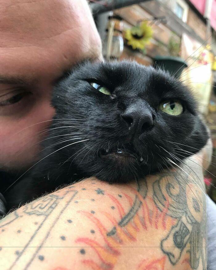 Котики, которым абсолютно не нужны эти ваши обнимашки