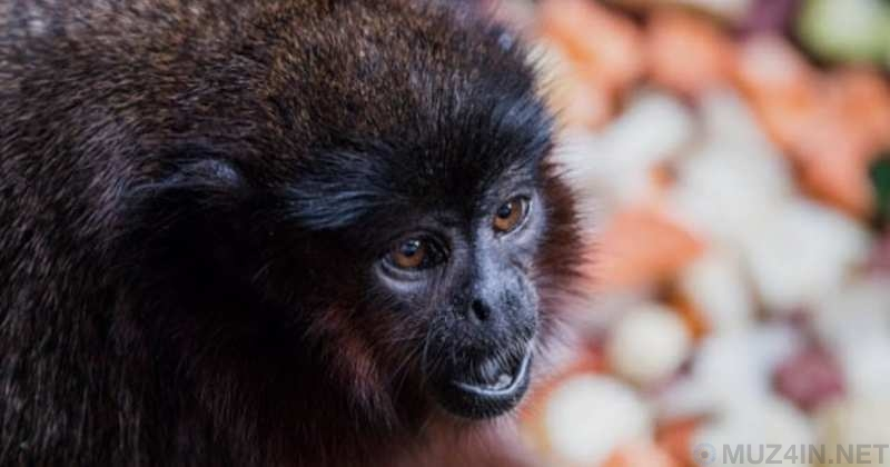 Удивительные и странные факты о какашках животных