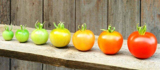 Почему по-русски томаты называются помидорами?