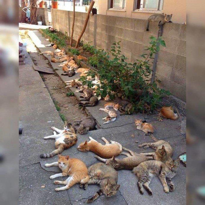 Позитивная жизнь с котейками и их забавные выходки