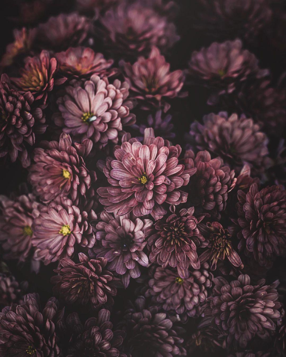 Красота цветов на снимках от Хико Такахаси