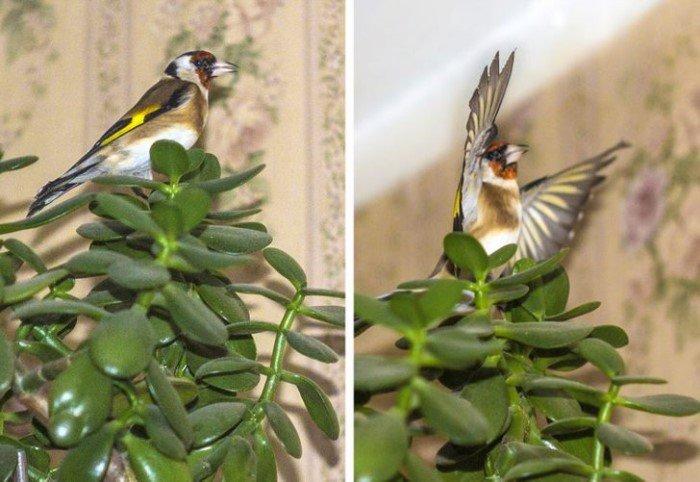 Забавные снимки встреч с дикими животными и птицами