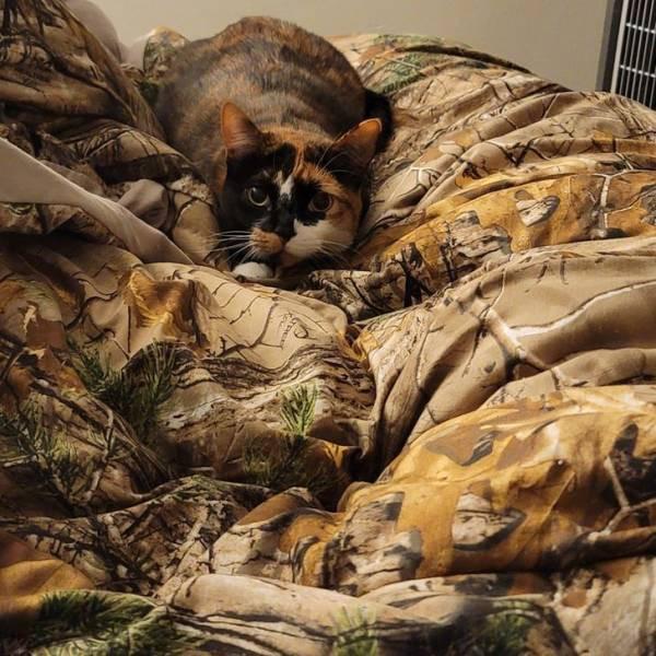 Домашние животные, которые могут легко скрыться от хозяев