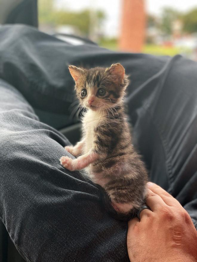 Люди делятся очаровательными снимками незаконно маленьких котиков