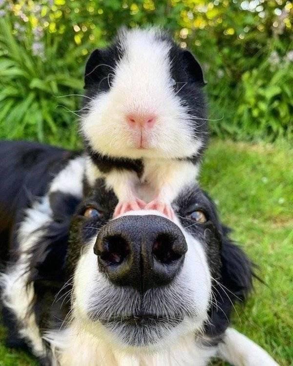 Милые и забавные животные заряжают позитивом
