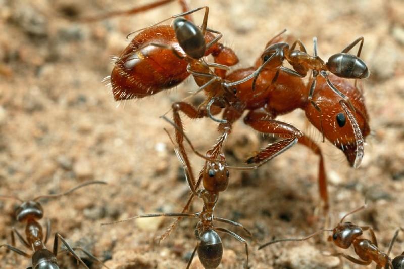 Самые ужасные и опасные насекомые